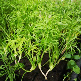 Plants autres (en mottes)